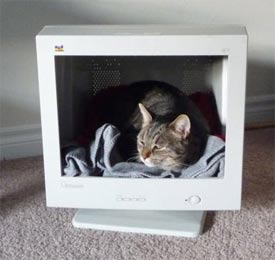 Upcycling a computer screen for a cat (no mouse!)